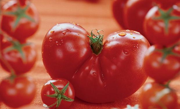 Сорт томата: Адмиралтейский