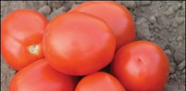 Сорт томата: Адванс   f1