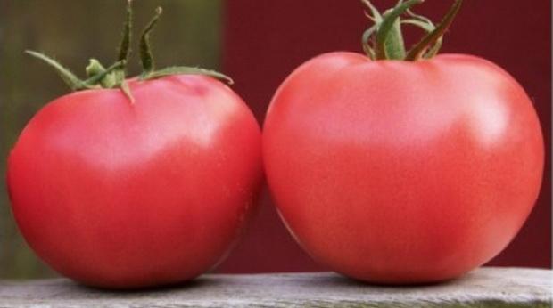 Сорт томата: Афен   f1