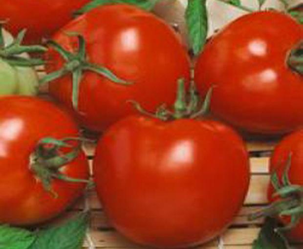 Сорт томата: Агитатор f1