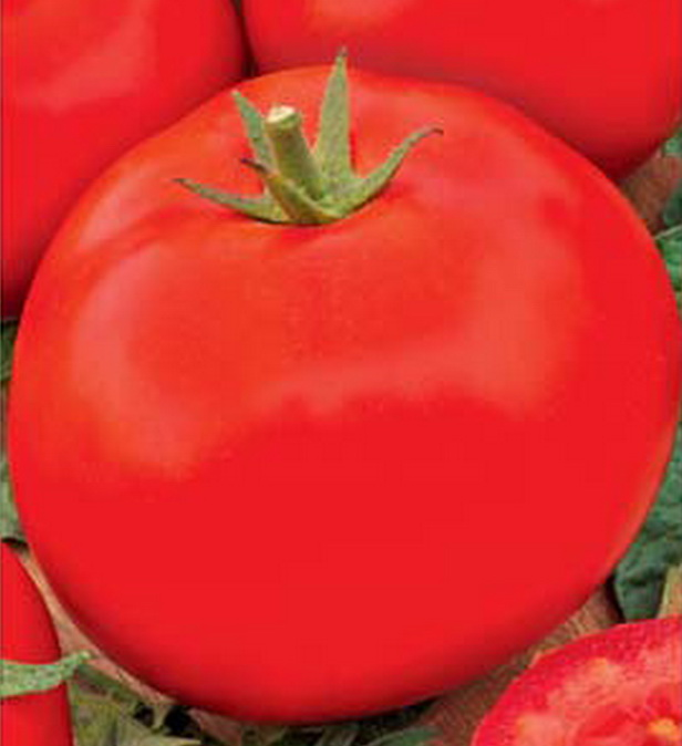 Сорт томата: Аида   f1
