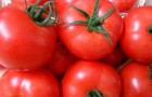 Сорт томата: Акдениз f1