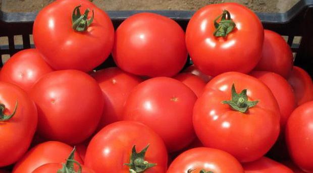 Сорт томата: Аксай   f1