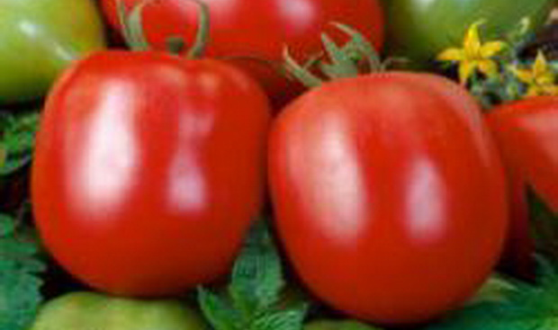 Сорт томата: Альбион   f1