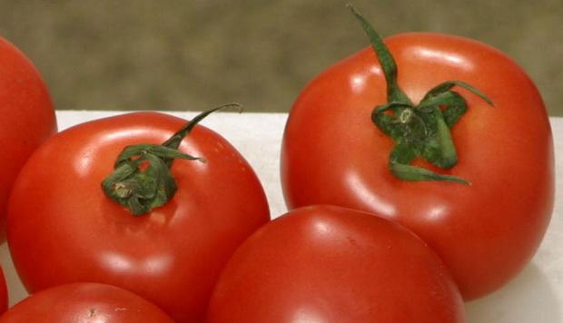 Сорт томата: Алекс