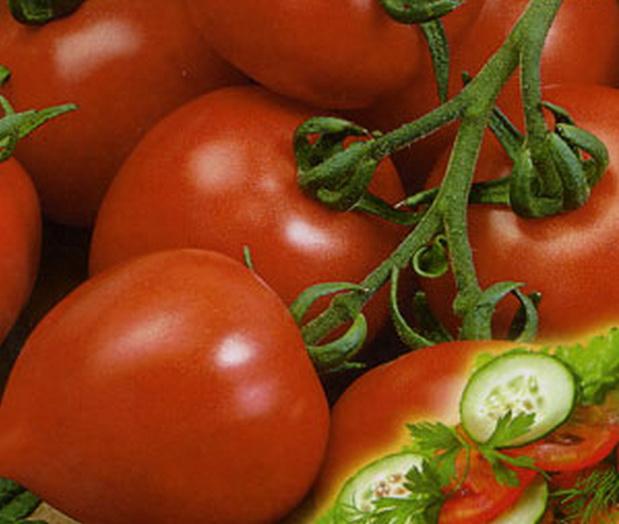 Сорт томата: Алешка   f1