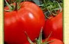 Сорт томата: Альгамбра f1