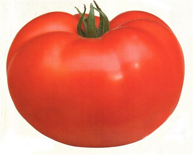 Сорт томата: Альтаир   f1