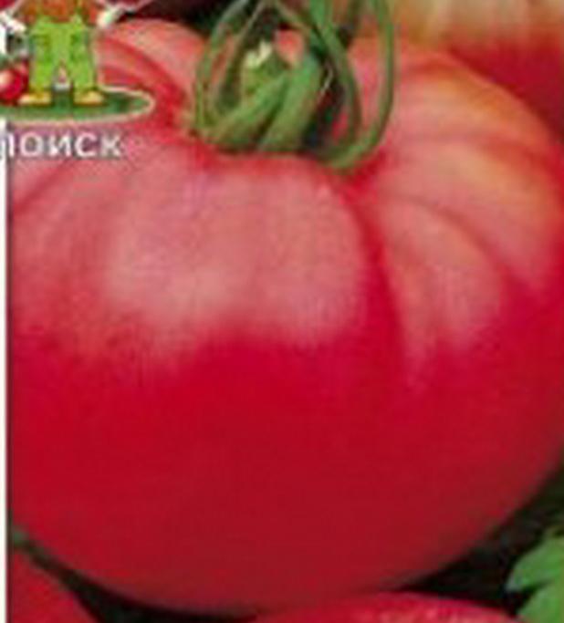 Сорт томата: Алтайский розовый