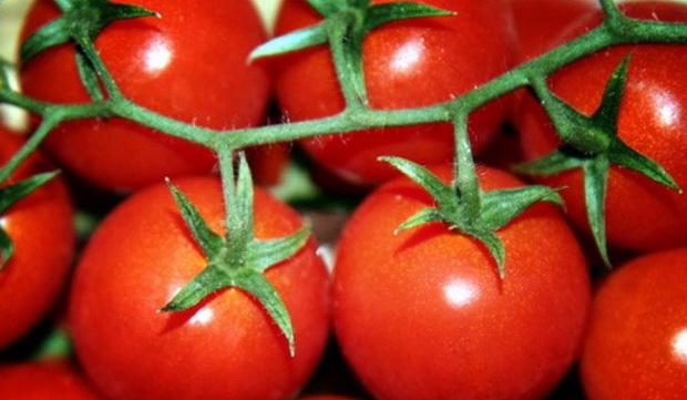 Сорт томата: Алые паруса