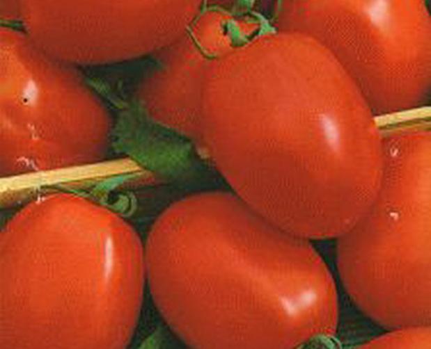 Сорт томата: Амико   f1