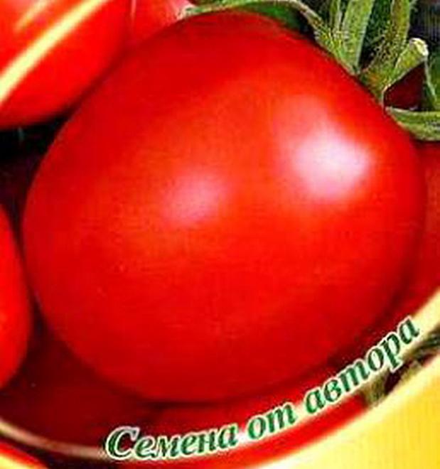 Сорт томата: Антонио