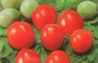 Сорт томата: Анжелика