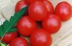 Сорт томата: Аракел