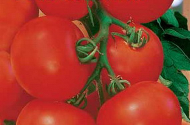 Сорт томата: Аристократ   f1