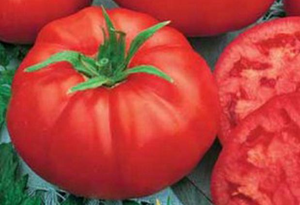 Сорт томата: Арлетта   f1