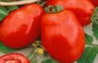 Сорт томата: Арни f1