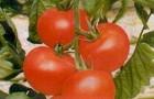 Сорт томата: Астона f1