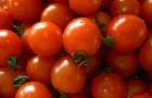 Сорт томата: Астраханский