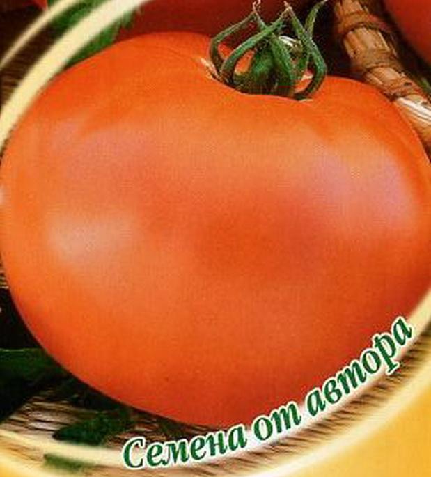 Сорт томата: Атос   f1