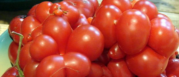 Сорт томата: Аврора   f1