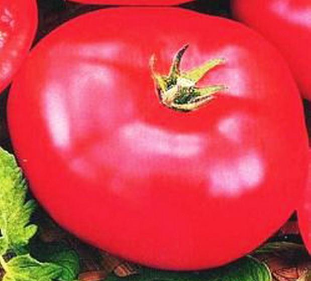 Сорт томата: Бабушкин подарок   f1