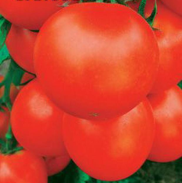 Сорт томата: Баловень судьбы