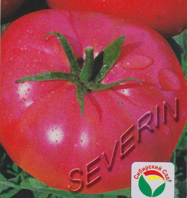 Сорт томата: Бармалей