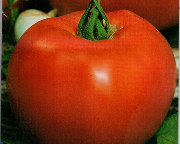 Сорт томата: Барон   f1