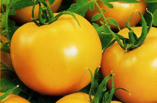 Сорт томата: Бавария