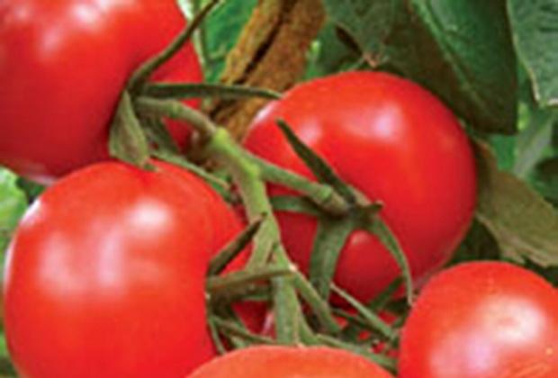 Сорт томата: Бельканто   f1