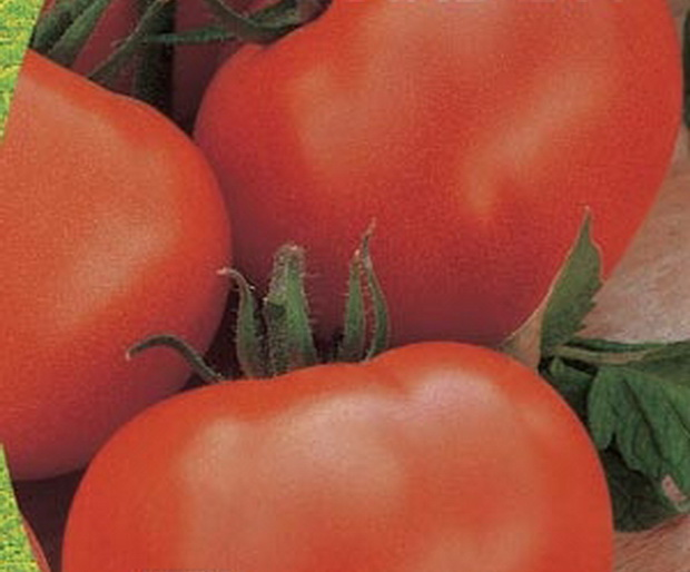 Сорт томата: Белый налив 241