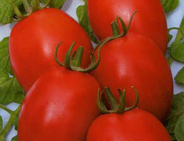 Сорт томата: Бенито   f1