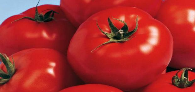 Сорт томата: Берберана   f1
