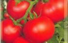 Сорт томата: Бетта