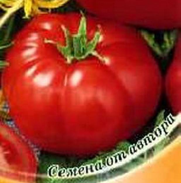 Сорт томата: Биатлон   f1