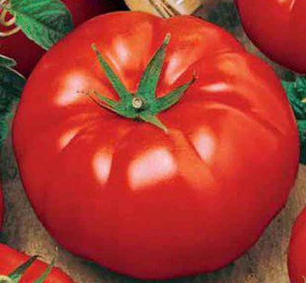 Сорт томата: Биг биф   f1