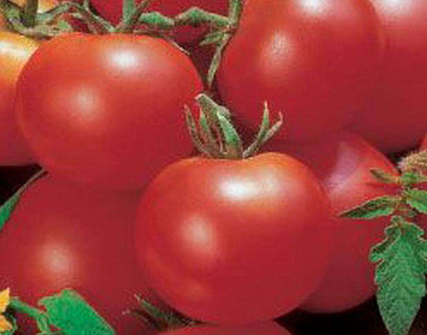Сорт томата: Бистро   f1