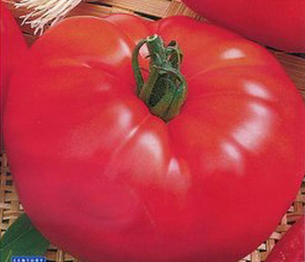 Сорт томата: Блеск   f1