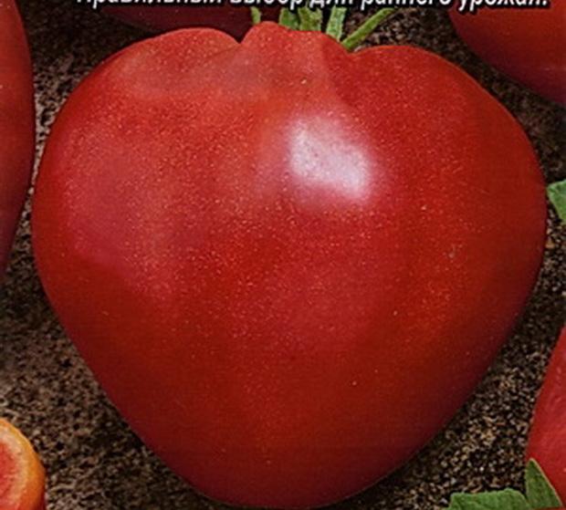Сорт томата: Бодрячок