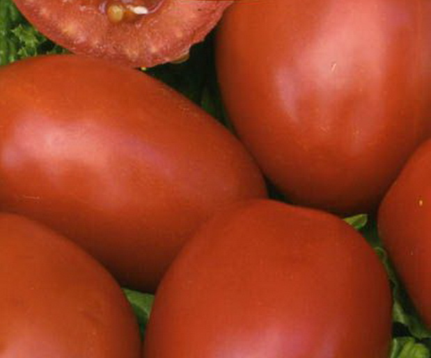 Сорт томата: Боец