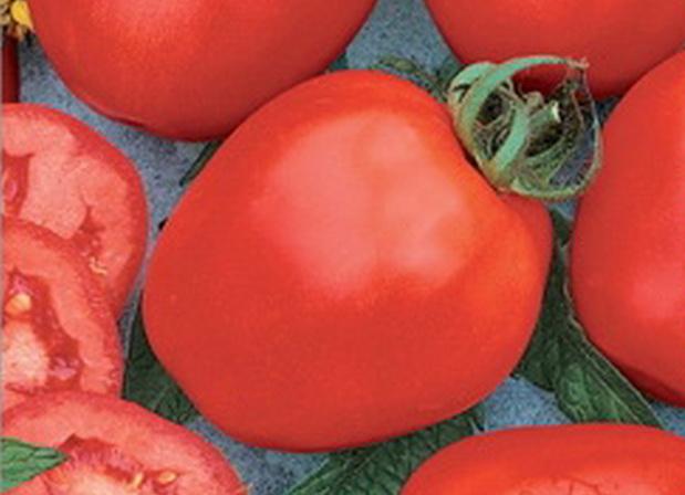 Сорт томата: Богатырь