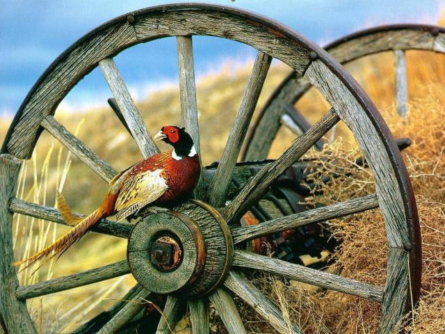 Болезнь фазанов – Гиповитаминоз D