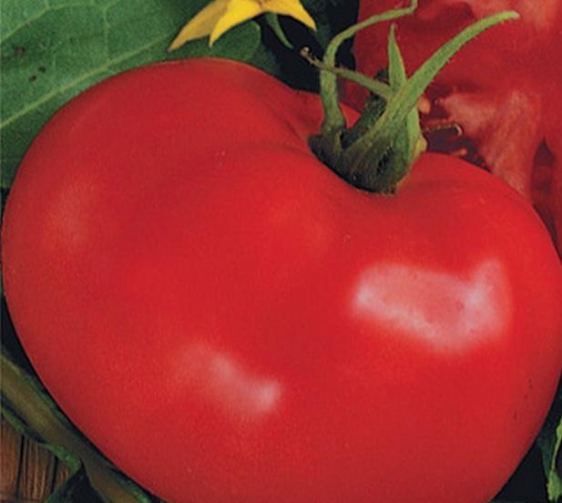 Сорт томата: Большевик   f1