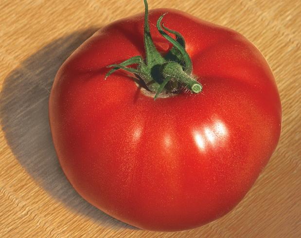 Сорт томата: Большой брат   f1