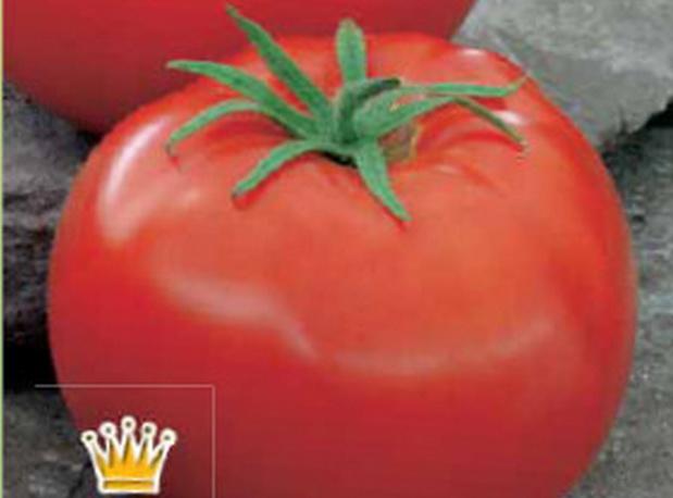 Сорт томата: Боровичок   f1
