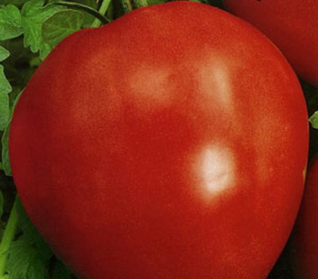 Сорт томата: Буденовка