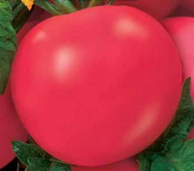 Сорт томата: Бумбараш   f1