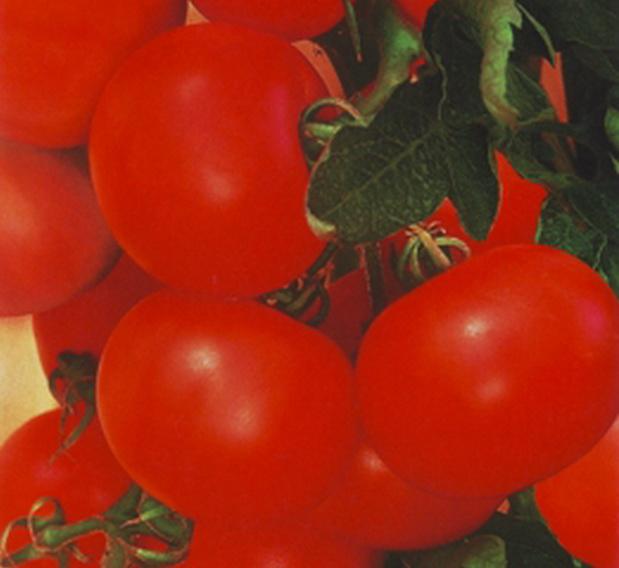 Сорт томата: Бумеранг   f1