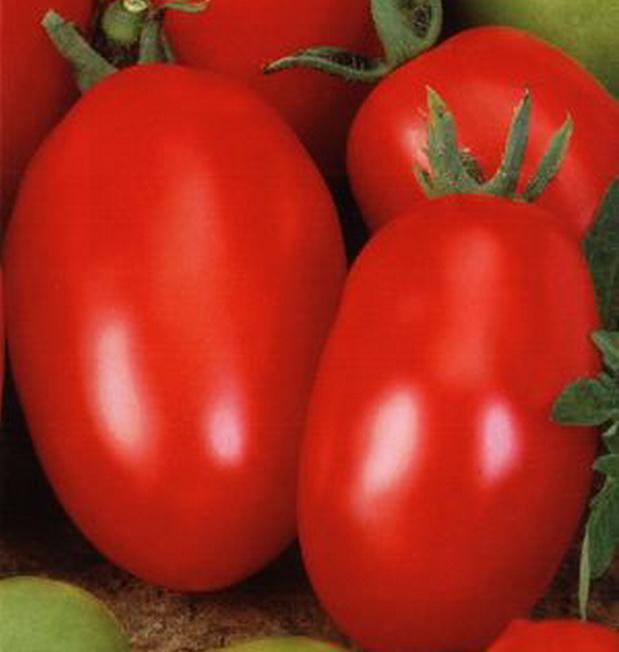 Сорт томата: Буратино